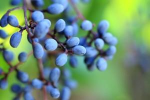 berries-275935_640